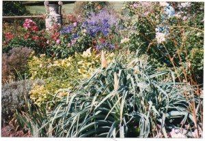 Killerton Herbaceous Border